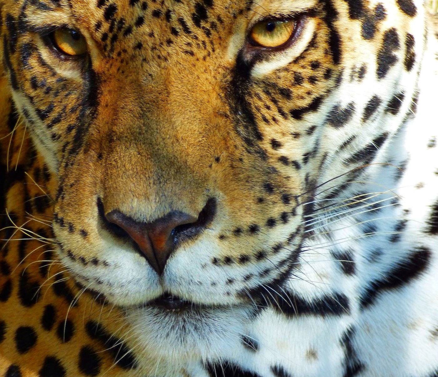 Key Biodiversity Areas and Jaguar Conservation Units and Corridors