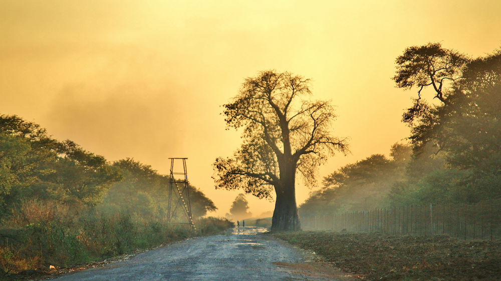 Beneath the baobab tree. Photo: Canva Stock Image