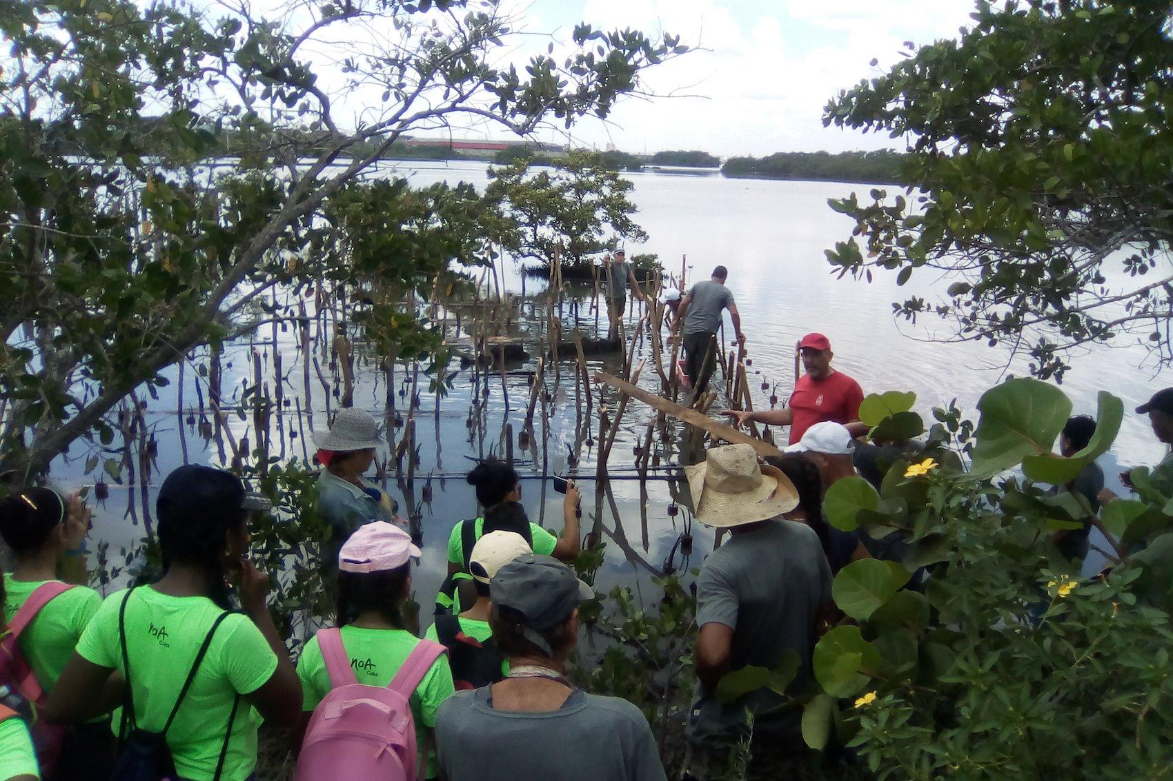 Capacitación de estudiantes sobre restauración de manglares utilizando estanquillos en la bahía de La Habana / Crédito de la foto: Proyecto Manglar Vivo, PNUD Cuba