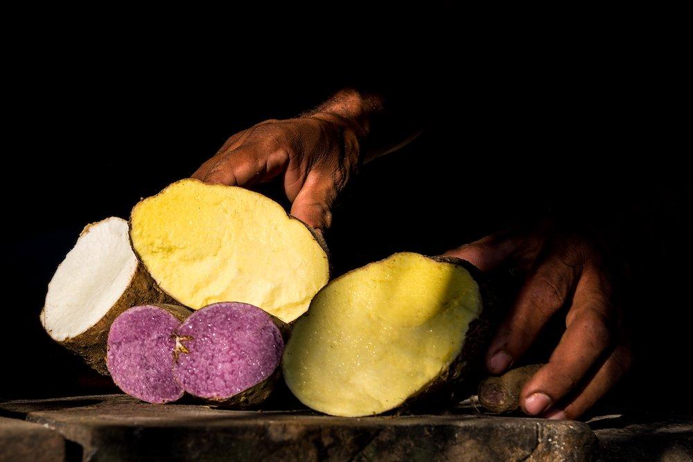 Coloured yams in Montes de Maria / Photo credit: Mauricio Enriquez