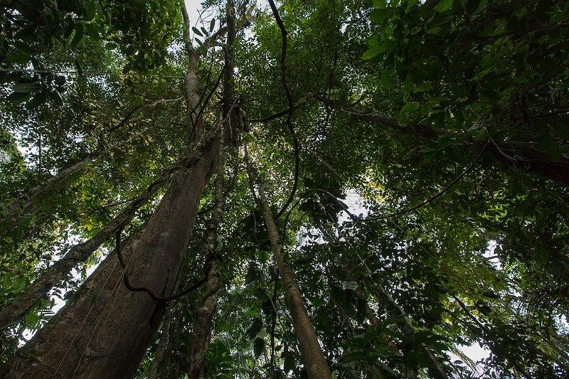 Tropical dry forest canopy / Photo credit: Andrés Estefan, UNDP Colombia