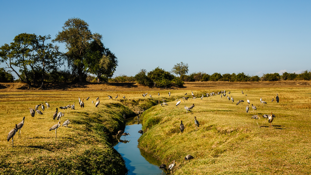 Diversified incomes support more diverse habitats and ecosystem protection. Photo: Canva Stock Image.